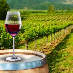 Los 5 mejores vinos mexicanos