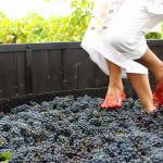 ¡Vamos a pisar uvas este 13, 14 y 15 de julio en la vendimia de Querétaro!