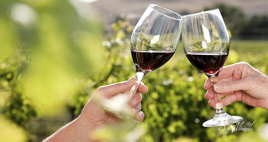los beneficios del vino orgánico copas