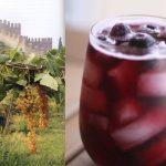 Información sorprendente sobre el vino