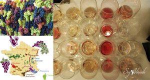 Los diferentes tipos de Uva de la Provenza