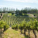 Cuál es la nueva región vinícola en EU para visitar