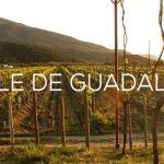 Las casas vinícolas más importantes de México