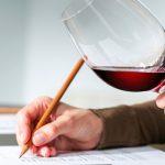 ¡No te pierdas! Aquí una guía para principiantes en vino