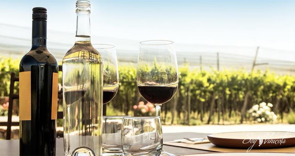 Conociendo todo sobre los vinos de África