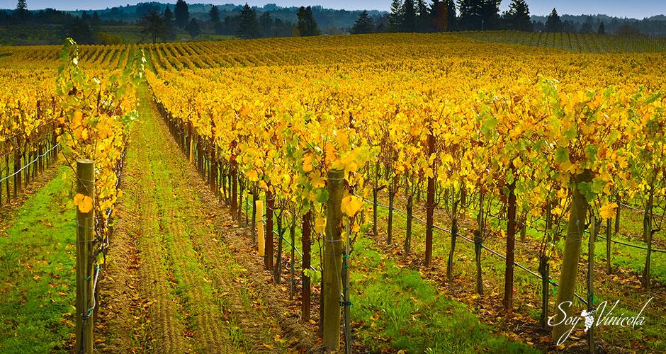 El suelo en la viticultura