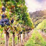 Regiones vinícolas por descubrir que tendrán éxito muy pronto
