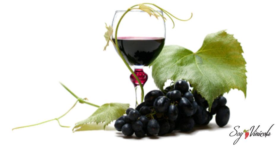 ¿Qué es la calidad del vino?