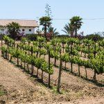 La historia vinícola de Valle de Guadalupe