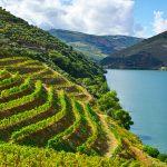 Cambio climático llevará a viñedos a las alturas