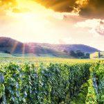 Las mejores 6 rutas del vino en el mundo