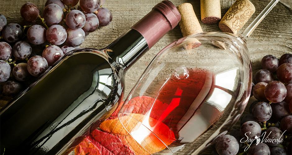 Conociendo las características básicas de un vino
